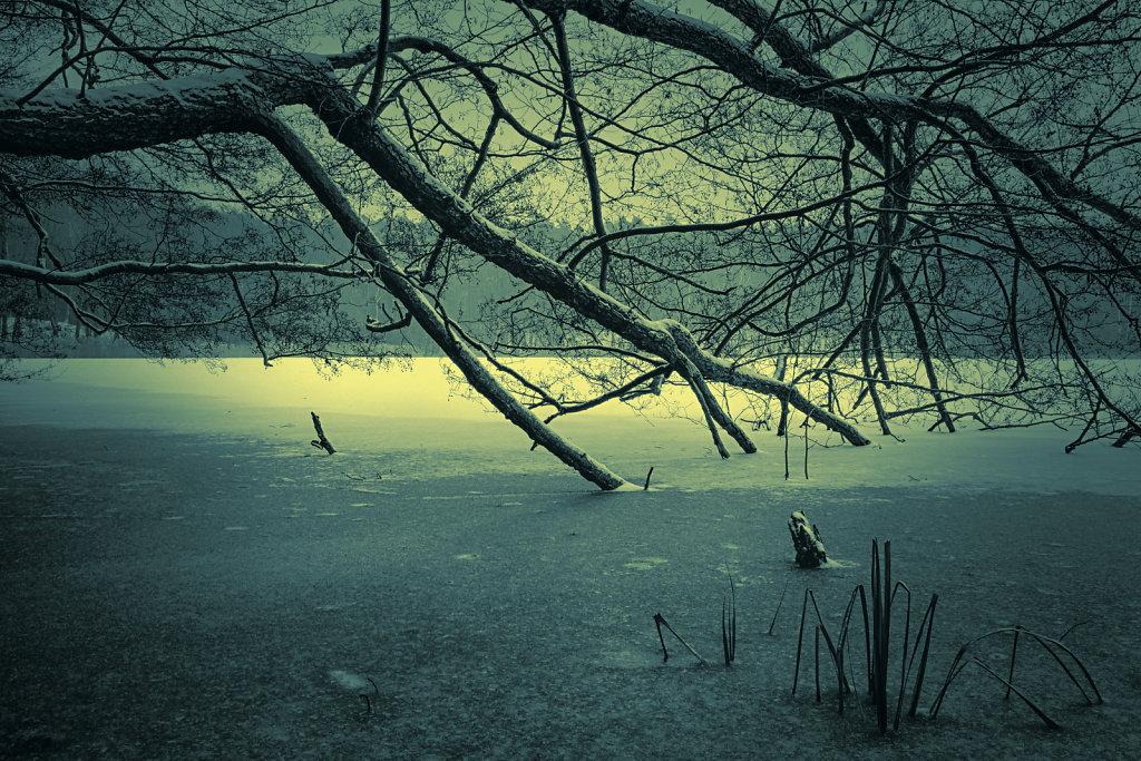 winter trees II (moonlight)